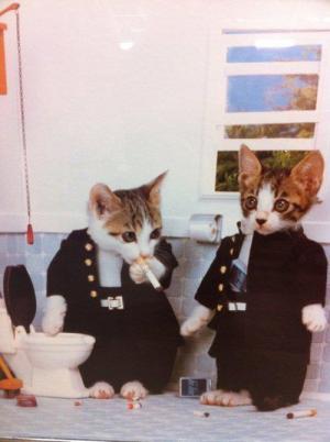 smoking cats